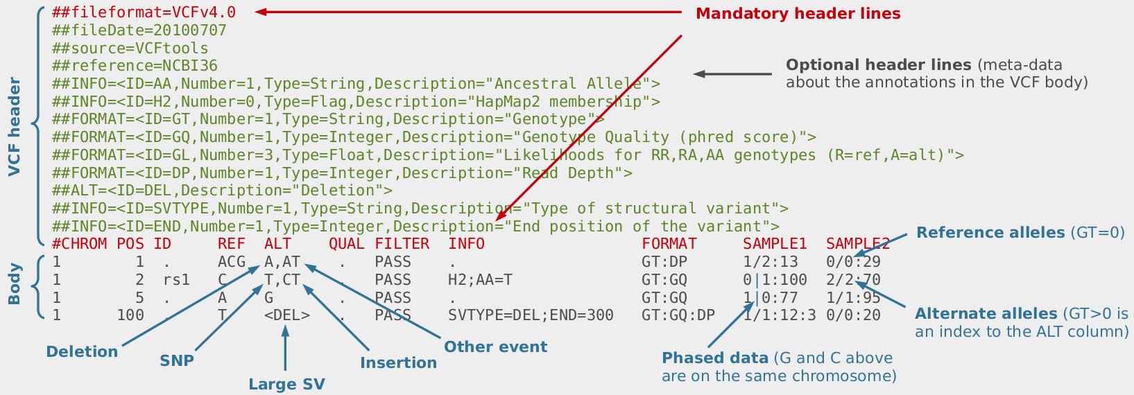 SNP calling — Bioinformatics at COMAV 0.1 documentation